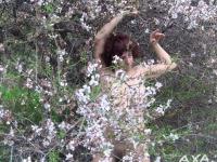 Anosia - Almond tree 3 thumb