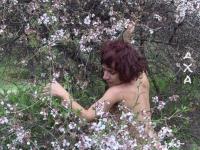 Anosia - Almond tree 4 thumb